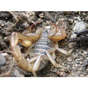 蝎子是不是保护动物