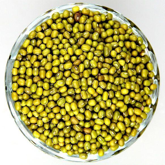 绿豆生长过程简笔画