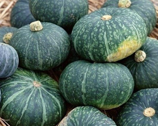 九台市西营城镇庭院种植农民专业