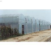 异型温室大棚