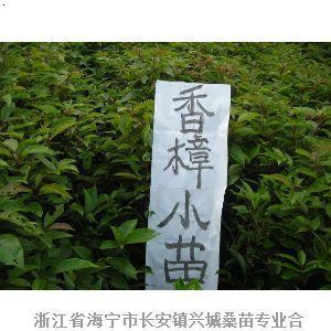 浙江省海宁市长安镇_海宁市长安镇地图