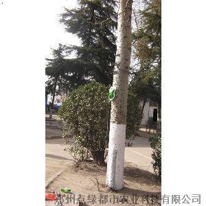 【大树输液袋】厂家,价格,图片_郑州点绿都市农业科技