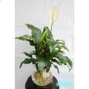 这是什么植物?根茎似人参._这是什么植物,根茎像人参
