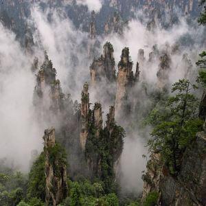 【张家界国家森林公园】厂家,价格,图片_重庆周记百货