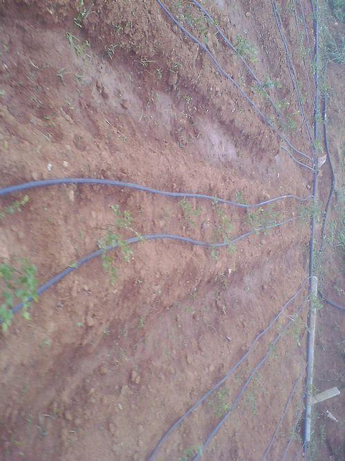 滴喷灌溉工程