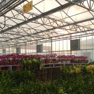长通农业:花卉市场