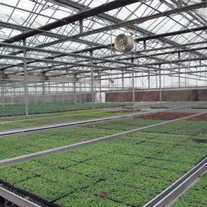 长通农业:育苗工厂