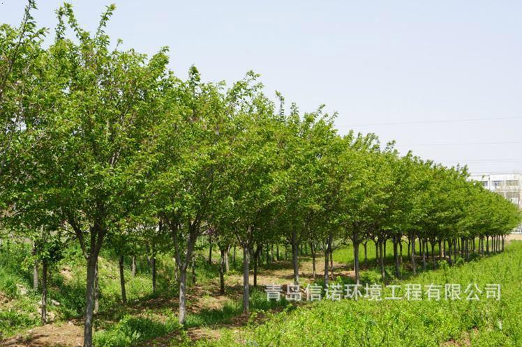 生态农庄规划设计和效果图高清图片