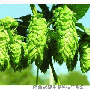 必途 找产品 植物提取物 啤酒花提取物  中国领先的商业搜索和社区