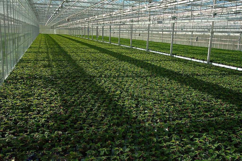 鼎鑫温室|南阳智能温室安装|新乡薄膜温室施工