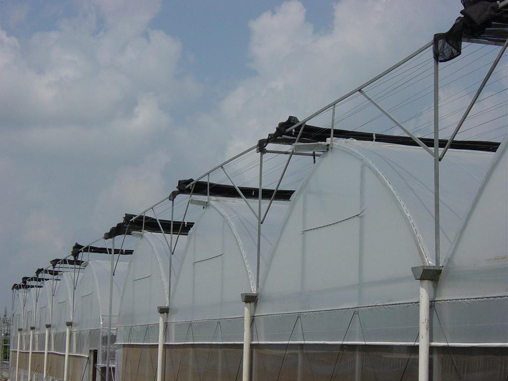 鼎鑫温室| 河南蔬菜大棚厂家|蔬菜大棚价格
