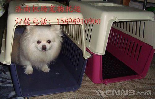 济南天翔宠物托运公司服务范围:宠物航空托运