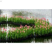 人工湿地水质净化
