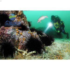 南澳潜水抓海胆海螺【南澳岛旅游攻略首选】
