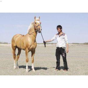 产品首页 农业 特种养殖动物 汗血宝马销售