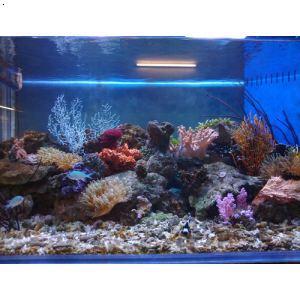 海水缸及珊瑚