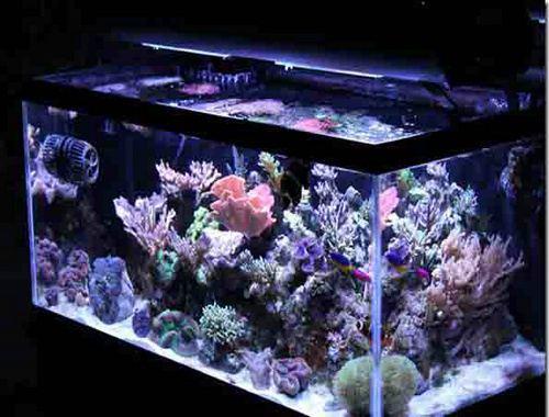 锦鲤家庭鱼池设计