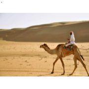 阿拉伯语翻译最专业