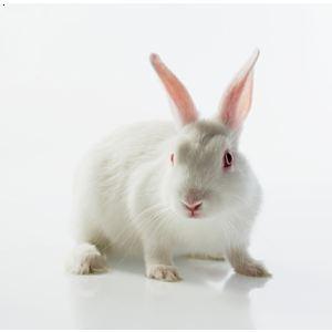 壁纸 动物 猫 猫咪 兔子 小猫 桌面 300_300