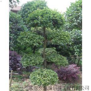 【造型树】厂家,价格,图片_武汉久逢缘园林工程有限
