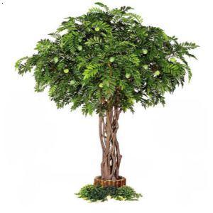 yz-1740 荔枝树