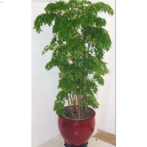 产品首页 商务服务 企业日常服务 物业管理 绿植苗木租赁