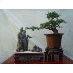 树石盆景  价      格: 面议 品      牌: 济南市历城区双银盆景制作