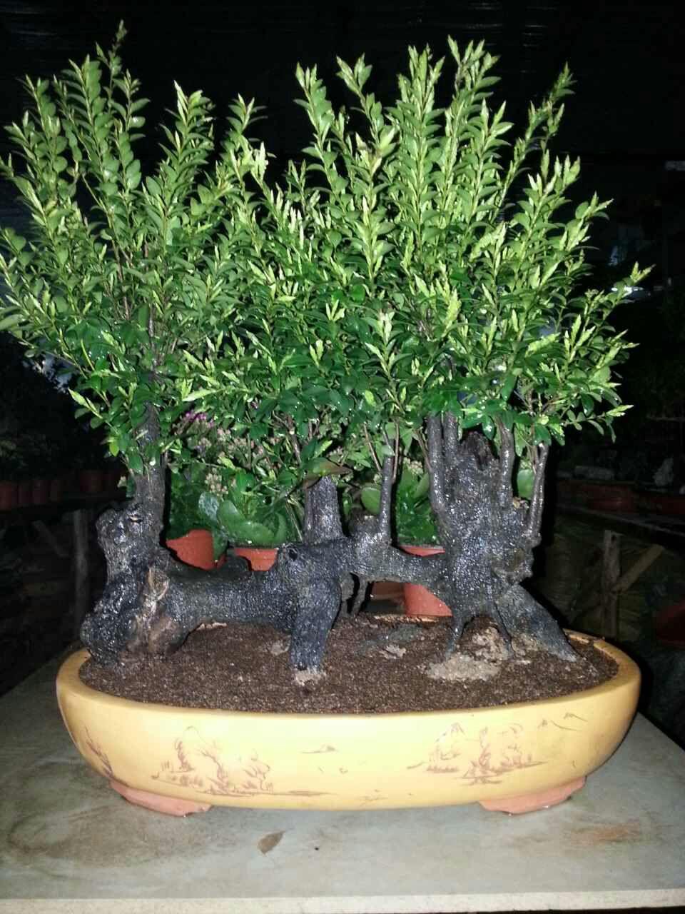 盆栽 植物 960_1280