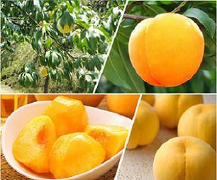 绿丰源黄桃专用有机肥