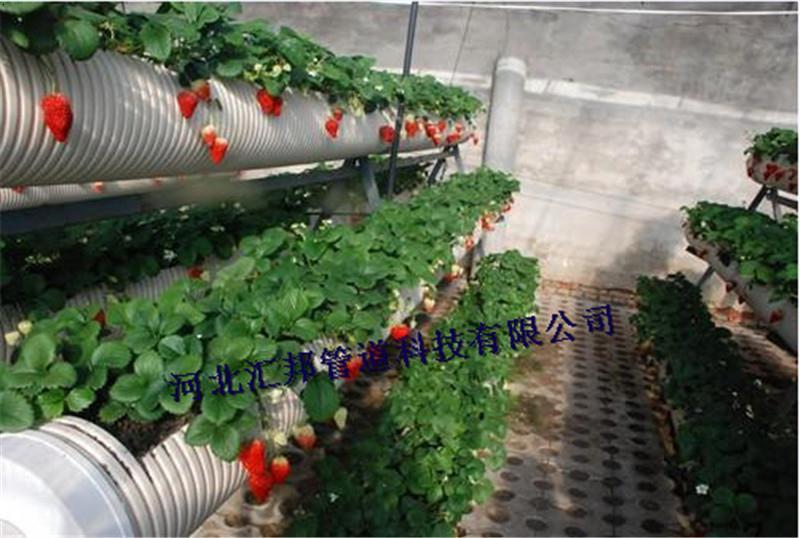 草莓种植槽 石家庄草