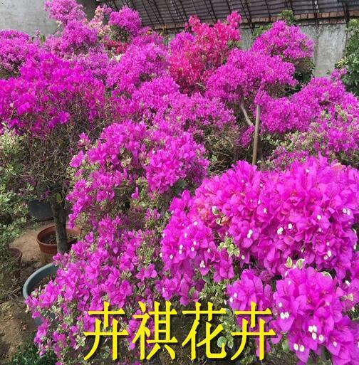 唐山花卉租摆