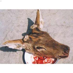 【鹿头】厂家,价格,图片