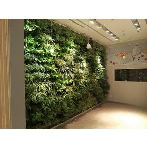 【室内墙面绿化】厂家,价格,图片_北京金信装饰材料图片