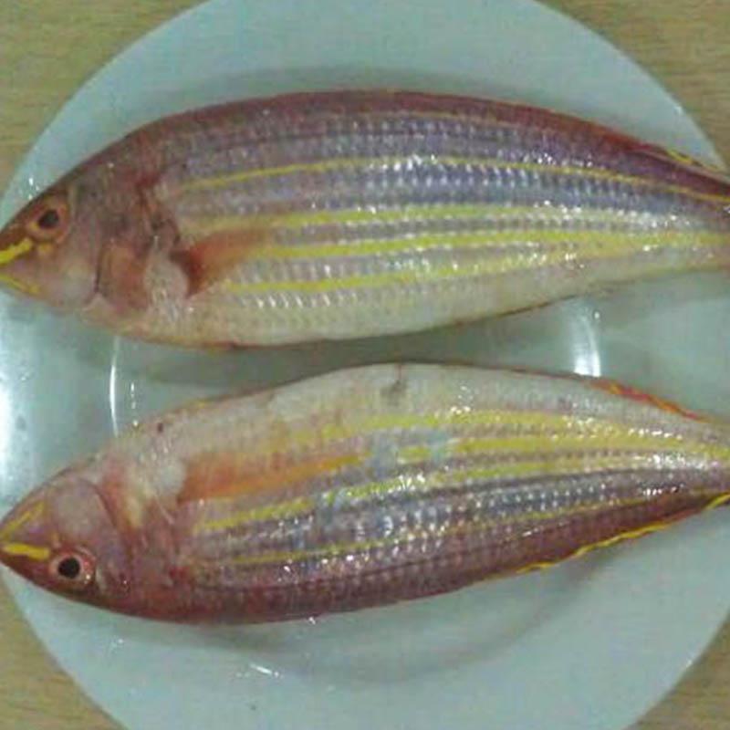 鱼的主要结构图