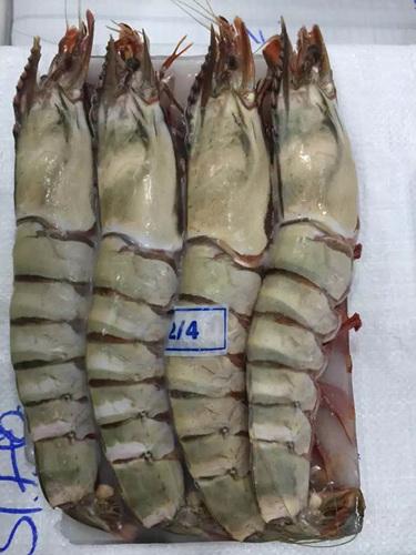 黑虎虾 Black tiger shrimp