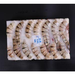 黑虎虾 BT/HLSO