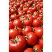 唐山西红柿代收|唐山西红柿代销|唐山蔬菜代收