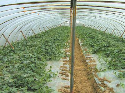 明瑞塑料|唐山農膜價格|唐山大棚膜質量