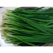唐山韭菜代收|唐山韭菜代销|唐山蔬菜代销