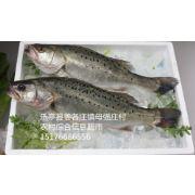 唐山鲈鱼批发|唐山海鲈鱼|唐山海鲈鱼批发