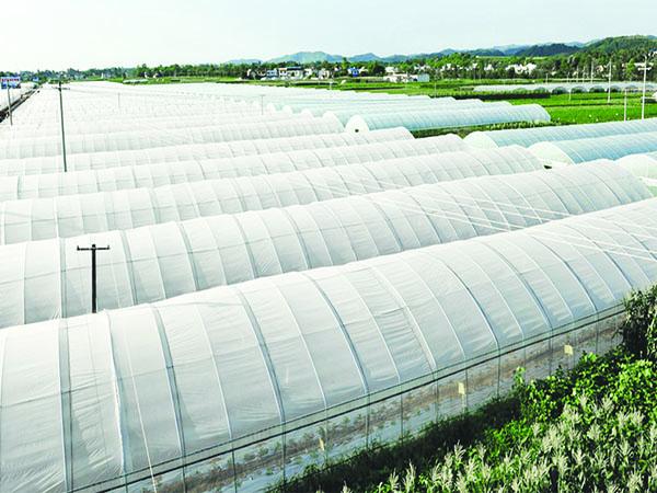 茂金属农用功能膜(农