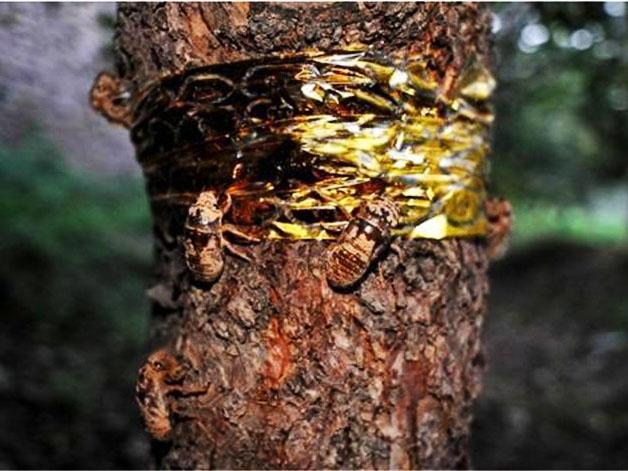 金蝉养殖过程中我们需要注意哪些事项?