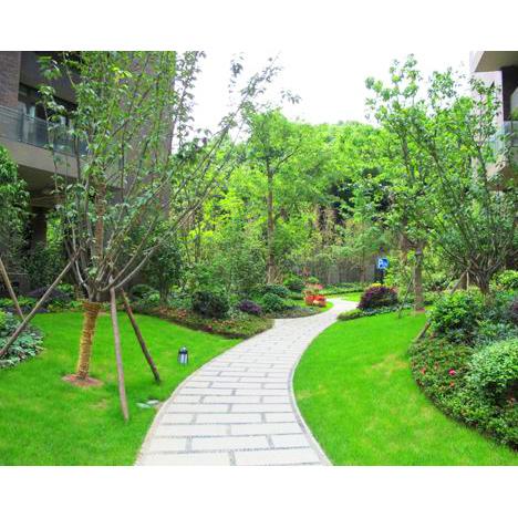枣强园林绿化