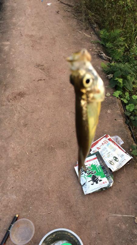 昆明鱼苗-翘壳鱼2
