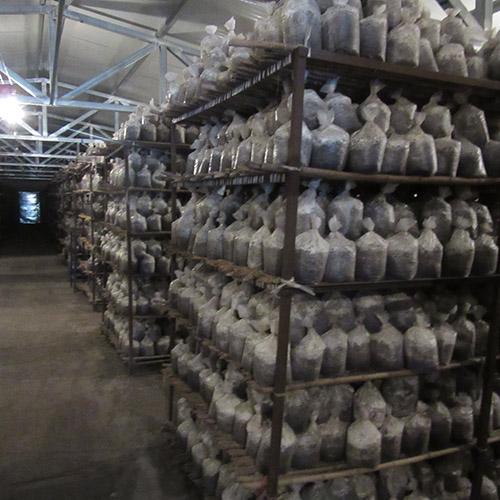 食用菌-菌袋