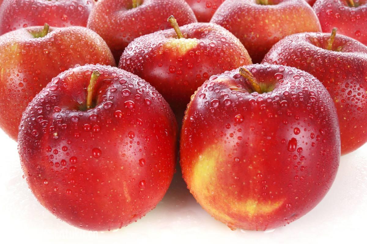 唐山苹果报价-唐山哪