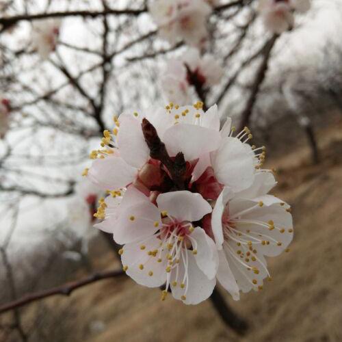 春天采摘园农家乐