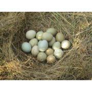 野鸡蛋批发,野鸡蛋礼盒,野鸡蛋批发价格
