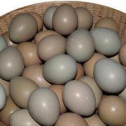 野鸡蛋批发