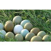 野鸡蛋礼盒,野鸡蛋礼品,野鸡蛋